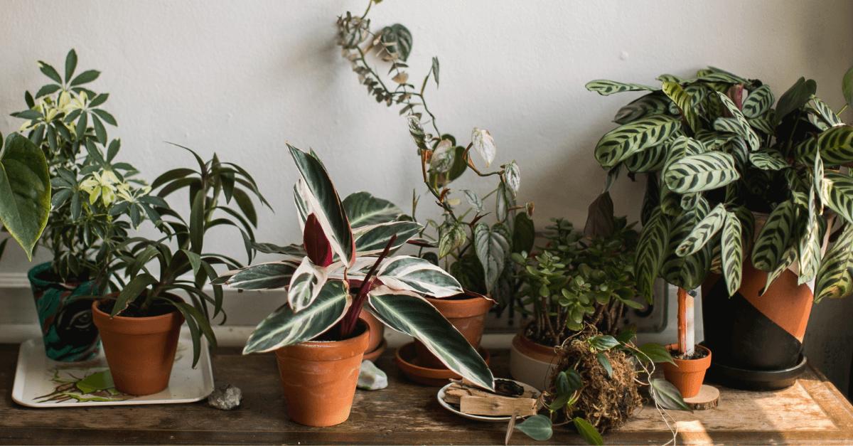 plantas-para-o-quarto